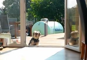 Αυτό το σκυλί όντως περιμένει να ανοίξει μια αόρατη πόρτα