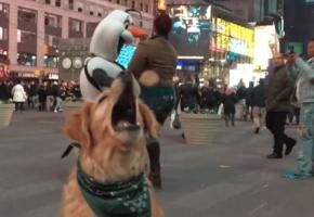 Ο Φριτς δεν Μπορεί να Πιάσει Φαγητό στον Αέρα – Μέρος 2: Αμπαλίαση στη Νέα Υόρκη (VIDEO)