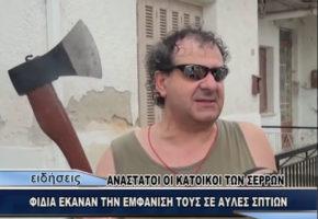 """""""Φίδι καλό μόνο νεκρό"""": Ένας Σερραίος και το τσεκούρι του σπέρνουν τον τρόμο στα ερπετά (VIDEO)"""