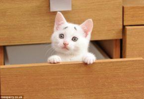 Γκάρι: Το μόνιμα προβληματισμένο γατί