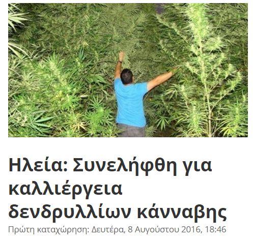 weed4