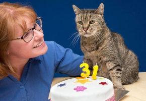 Αυτός ο γάτος έχει φάει τις 7 ζωές του και σβήνει τα 31 του κεράκια like a boss (PHOTO)