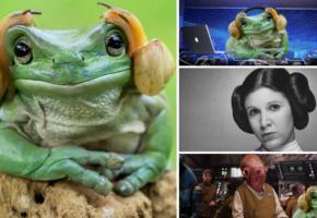 Φωτογράφος απαθανατίζει βάτραχο ολόιδιο με τη Leia Organa και το Photoshop κερνάει πόνο (PHOTOS)