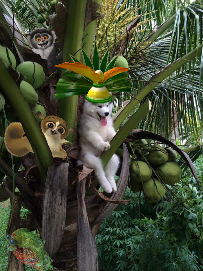 husky-tree-photoshop-battle-20-581c417727161__700