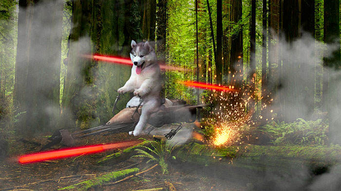 husky-tree-photoshop-battle-6-581c414f26226__700