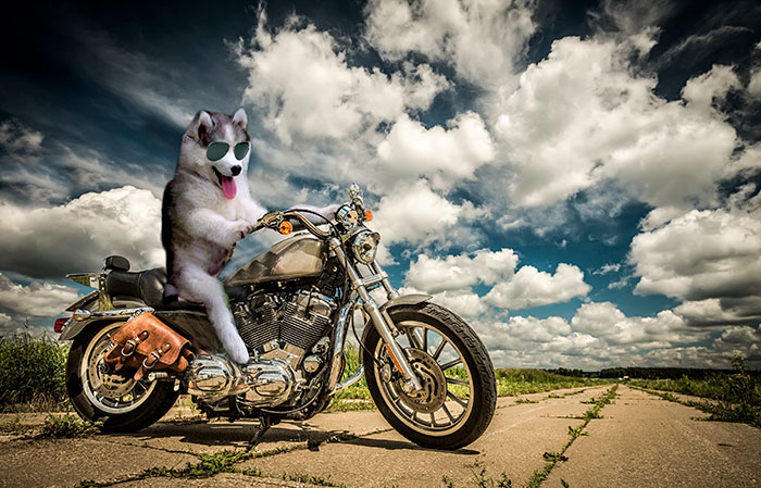 husky-tree-photoshop-battle-8-581c4153ed03f__700