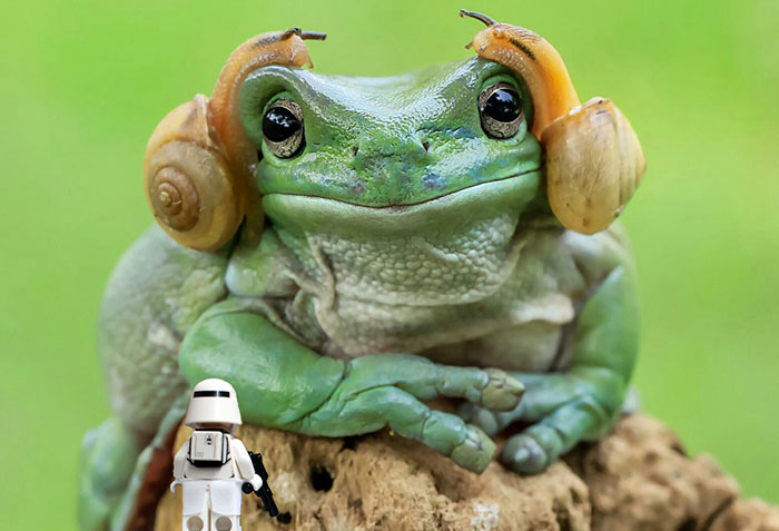 princess-leia-frog-snails-photoshop-battle-26-5839a9d480a78__700