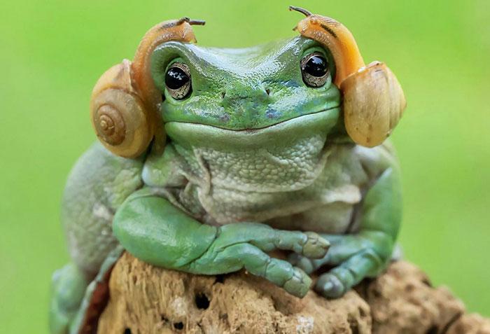 princess-leia-frog-snails-photoshop-battle-38