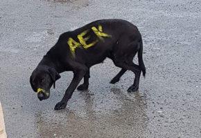 Λεβέντες οπαδοί γνωστής αθηναϊκής ομάδας έδειξαν σε αλλόθρησκο σκύλο τι σημαίνει να μπλέκεις με την ομάδα τους (PHOTOS)